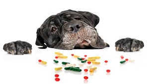 Choose Right Dog Nutritional Supplements-2.jpg
